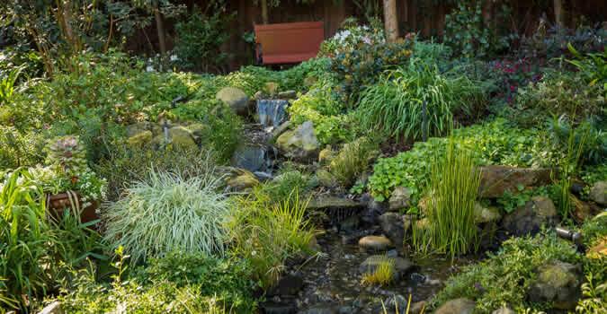 backyard garden ideas - Organic Landscaping - Mesa, AZ Chop Chop Landscaping - Mesa, AZ